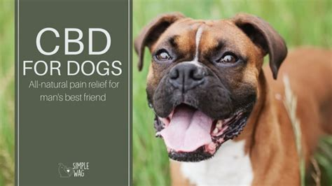 cbd for dogs cbd for dogs