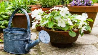 Garden Pottery Homelife Buyer S Guide To Garden Pots