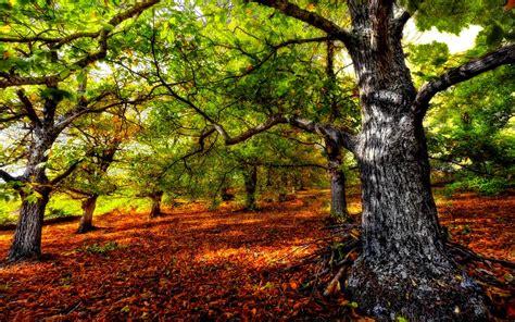 260515 in the forest hangs a forest desktop backgrounds free download pixelstalk net