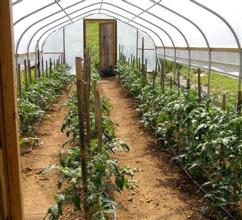 orto invernale in vaso come coltivare il pomodoro in inverno pomodoro