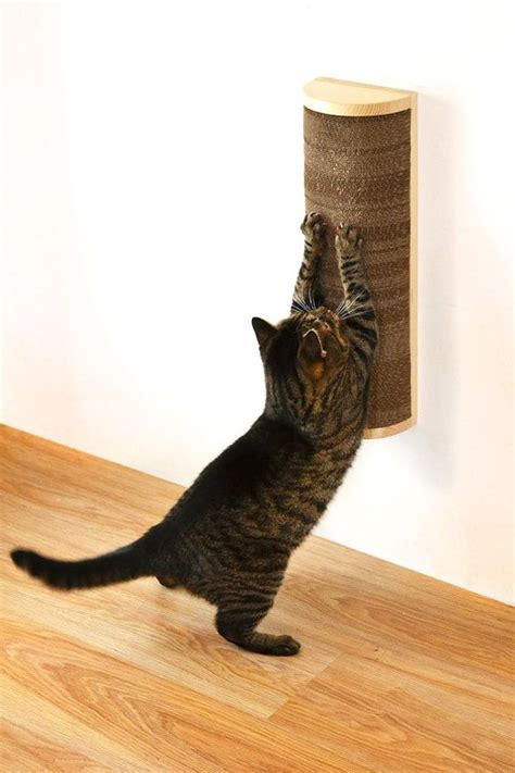 bathroom me chudai story creative and pet cat scratching 28 images ჱcreative