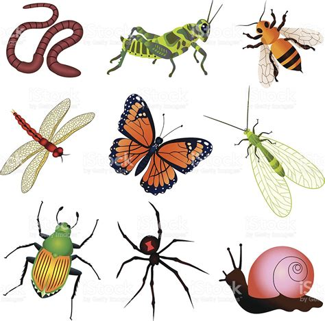 backyard insects garden creatures clipart collection
