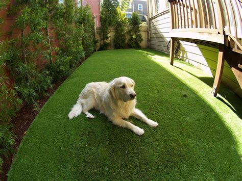 artificial grass for dogs artificial or synthetic grass run installation