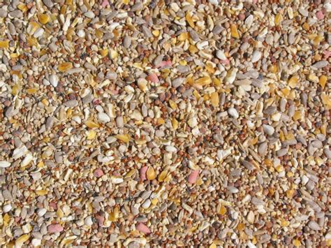 no mess bird seed food best price