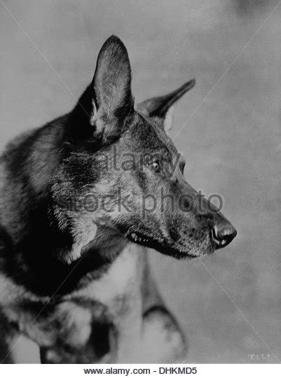 Rin Tin Tin rin tin tin stock photos rin tin tin stock images alamy