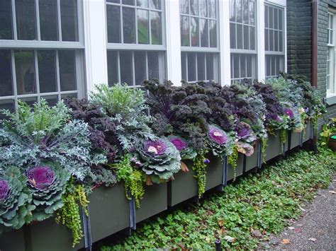 north window plants 25 trending fall window boxes ideas on pinterest fall