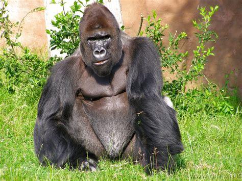 imagenes de animales no conocidos animales omnivoros y carn 237 voros animal world