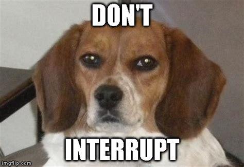 Beagle Meme - cute funny beagle www pixshark com images galleries