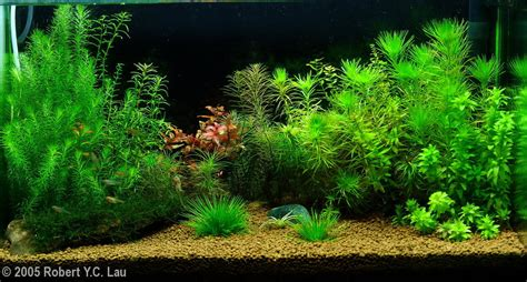 Aquascapes Hawaii by 2005 Aga Aquascaping Contest Entry 92