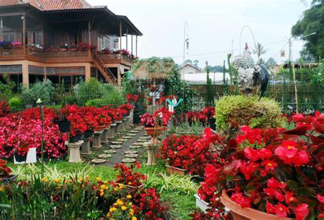 Jual Benih Strawberry Bandung wisata taman bunga di bandung infobdg