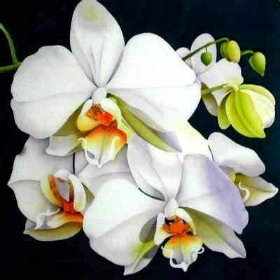Silk Painting Moth Orchid Silk Paintings Batik Black Orchid Oshawa