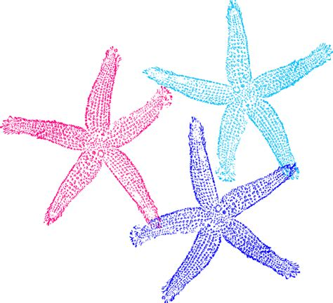 starfish colors starfish colors clip at clker vector clip