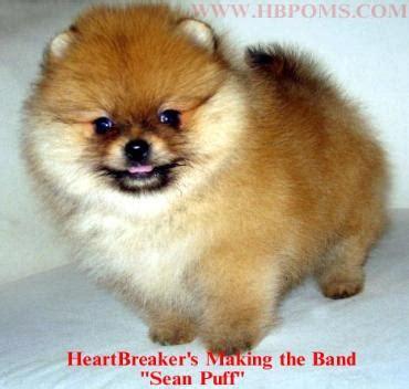 heartbreaker pomeranians boys