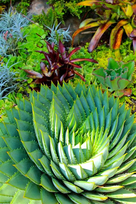 sharing nature s garden stunning san francisco fling garden tour of my dream garden