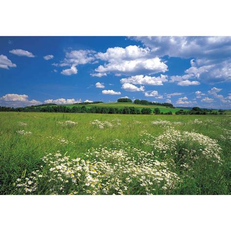 Home Depot East Meadow by Komar 100 In X 145 In Meadow Wall Mural 8 254 The Home