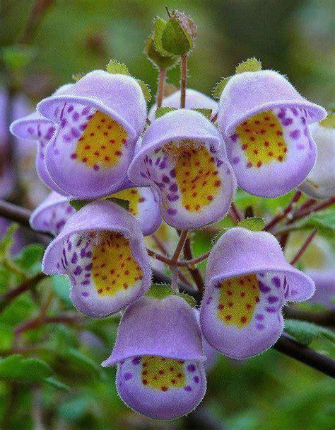imagenes lindas raras las flores mas raras y hermosas im 225 genes taringa