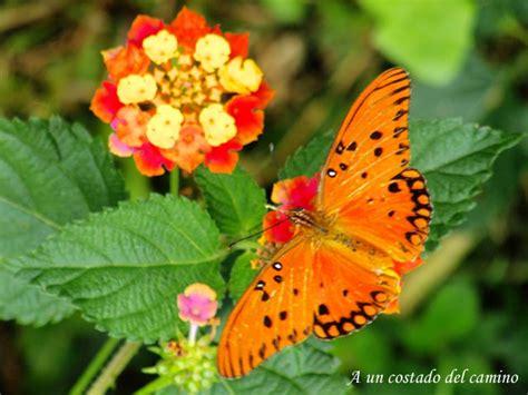 imagenes de flores que parecen animales flores y animales imagui