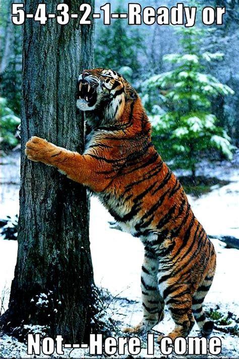 Funny Tiger Memes - tiger humor meme funny memes pinterest humor tigers