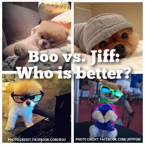 can all pomeranians look like boo boo vs jiff which pomeranian is better