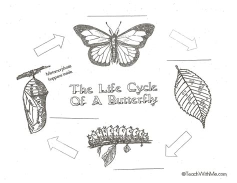 butterfly life cycle coloring pages printable kids coloring