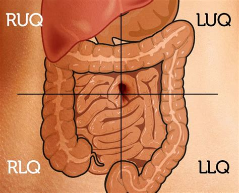 Feel Stool In Abdomen by Diagram Of The Four Quadrants Of The Abdomen Nursing