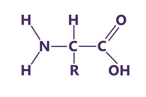 structure diagram diagram diagram of amino acid structure