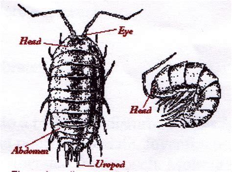 pillbug diagram pill bugs diagram
