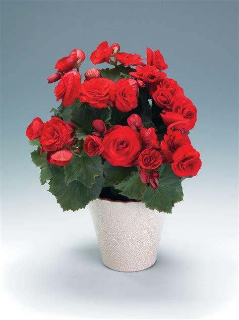 fiori in generale oltre 25 fantastiche idee su significato dei fiori su