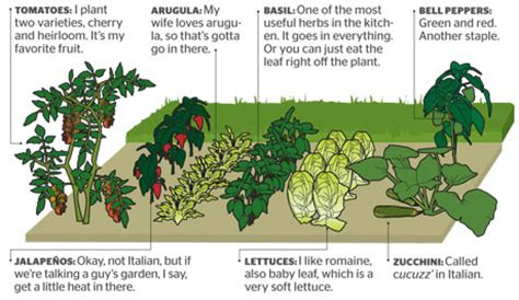 Vegetable Garden Layouts Planning A Vegetable Garden How To Plan A Vegetable Garden