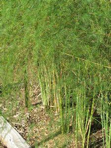grass killer for vegetable gardens vegetable garden 171 hill country agriculture