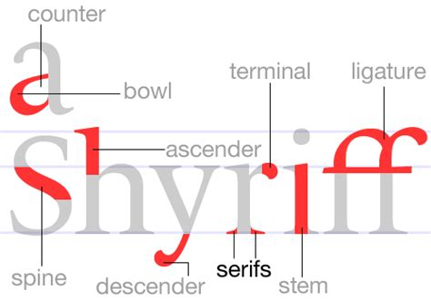 typography descender serifs and sherrifs and ascender bowl counter ligature terminal spine descender stem