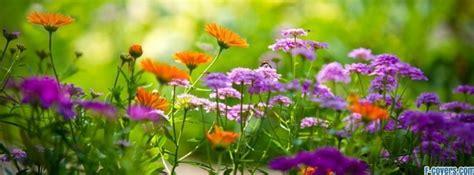 Summer Garden Flowers Flowers Covers