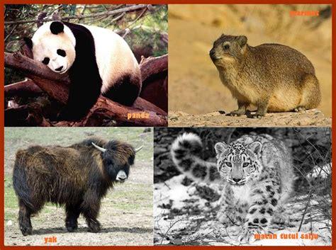 Bulu Korea Jenis Bulu Domba asia tengah general science