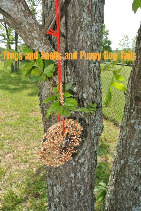 bagel bird feeder fspdt