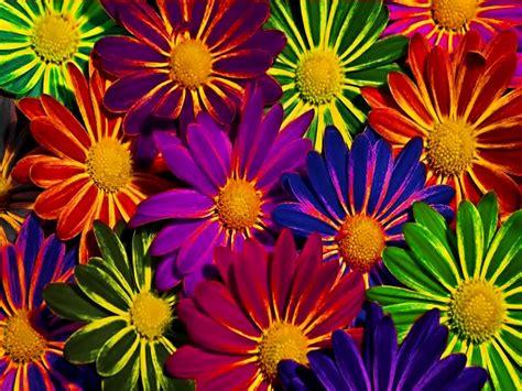 wallpaper flower colorful colorful flowers wallpaper wallpapersafari