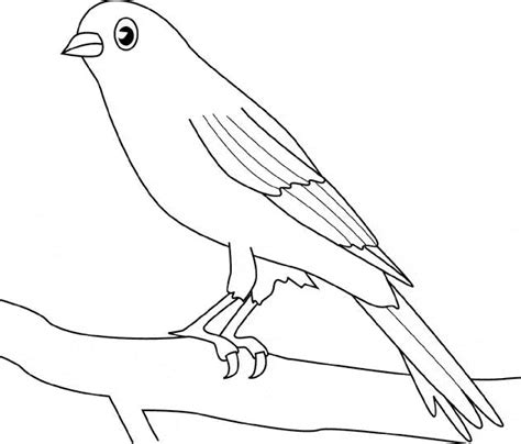 coloring pages canary bird canary coloring page animals town free canary color sheet