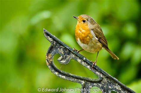 british wild birds gallery home in the wild