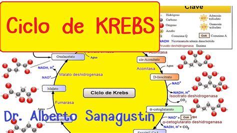 Resumen 8 Pasos De Bardach by Ciclo De Krebs Paso A Paso Bioqu 237 Mica