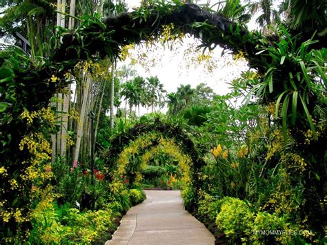 Botanical Gardens Singapore Photo Journal Singapore Botanic Gardens My Flies
