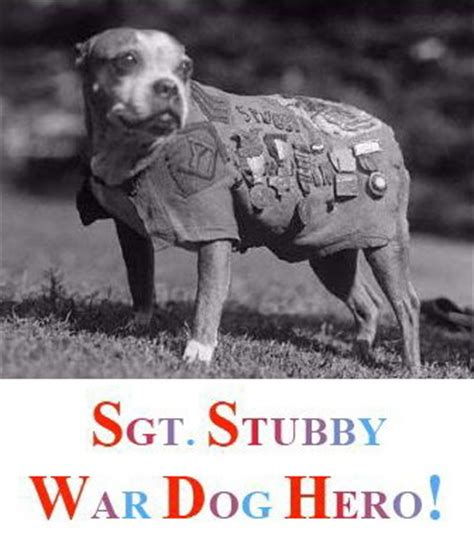 Sergeant Stubby Facts Sgt Stubby War