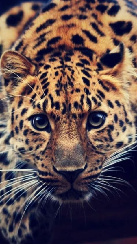 7 Gorgeous Animal Prints For Fall by 40 Best Beautiful With Gorgeous Animals Images On