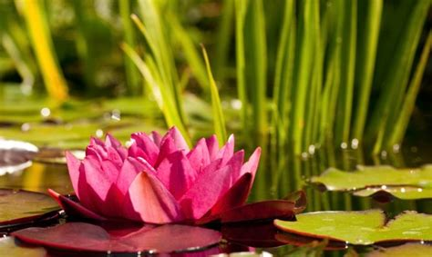 imagenes de flores acuaticas 301 moved permanently