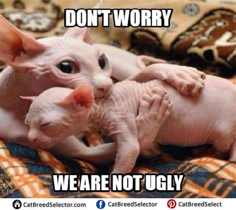 hairless cat meme hairless cat memes angry grumpy cats