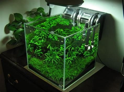 Membuat Aquascape Nano Tank | low tech tank show and tell low tech can be lush too