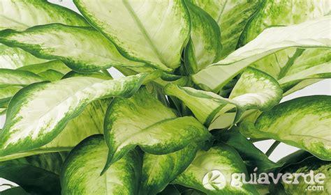 imágenes de flores venenosas the gallery for gt plantas venenosas de casa