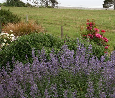 coastal gardening how to garden on the seacoast north