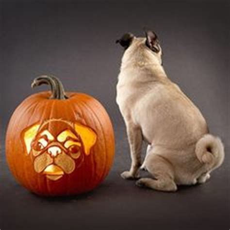 pug pumpkin stencil 1000 images about pug