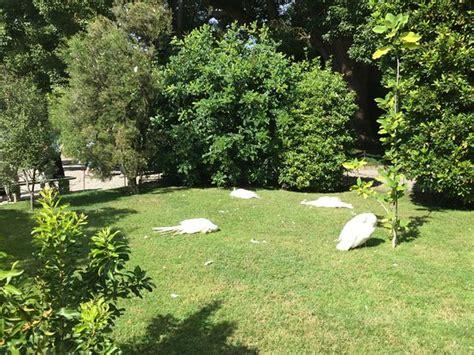 giardini borromeo giardino bild fr 229 n palazzo borromeo isola