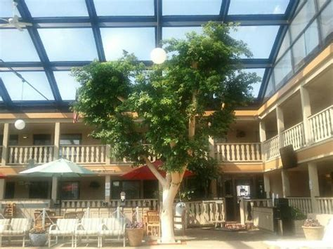 trees appleton wi live trees and flowers in the pool area picture of best