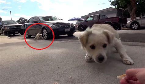 imagenes haciendo amor personas un v 237 deo de rescate de perros que te har 225 reir y creer en